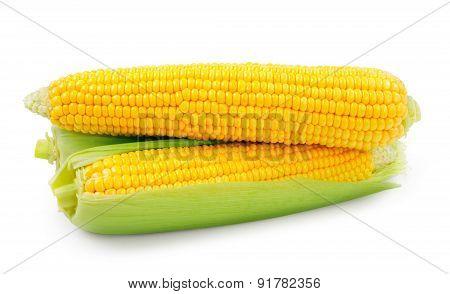 Fresh raw corn on white background.