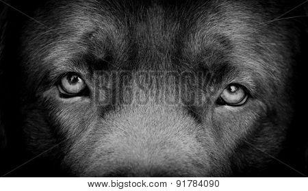 DOG, eyes expression
