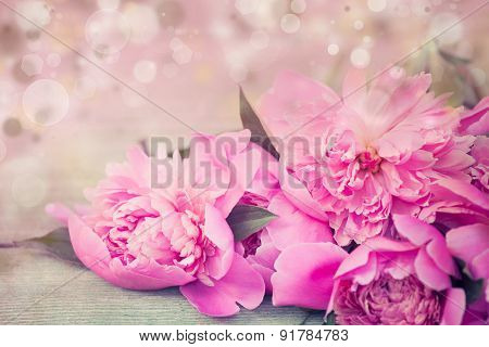 Beautiful pink roses on bokeh background