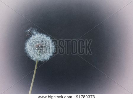 Fluffy Dandelion. Stylized Retro Photo