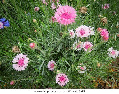 Flower On Hill