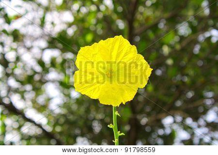 Yellow Flower Nature Blackground