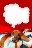image of hound dog  - Thoughtful Basset Hound puppy inside his dog house with a think bubble above his head - JPG