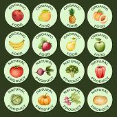 pic of water cabbage  - Watercolor set of icons vegetables and fruits vector illustration - JPG