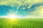picture of pea  - Beautiful sunrise over field pea - JPG
