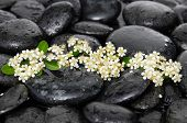stock photo of wet  - Tropical white flower with wet stones on wet background - JPG