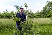 picture of prunes  - A organic farmer pruning a organic apple tree - JPG