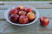 picture of spartan  - Fruit bowl of spartan apples outdoors on wood - JPG