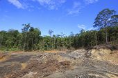 picture of rainforest  - Deforestation environmental destruction of rainforest  - JPG