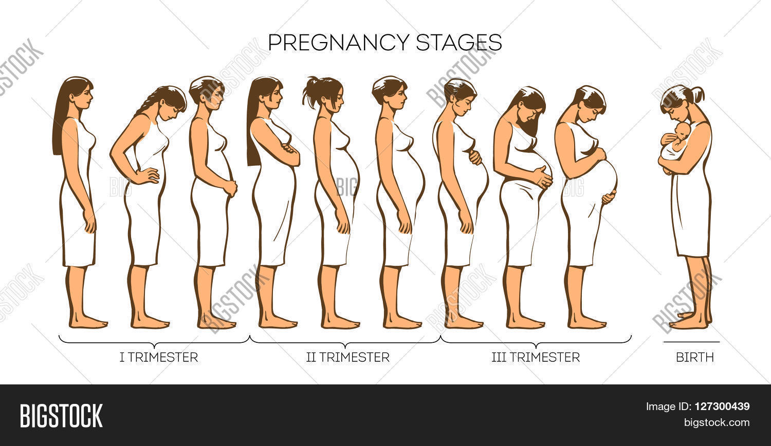 Stages Pregnancy Different Women Image Photo Bigstock