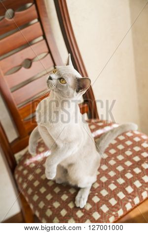 Cat is standing on the hind feet