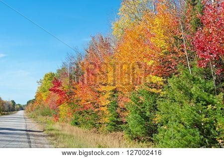 Falls Colorful Trees