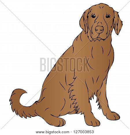an illustration of a brown dog sitting on the floor