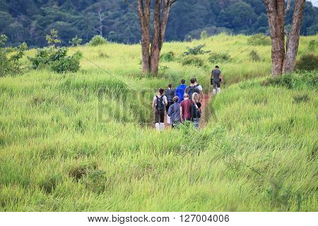 Nakonratchasima Thailand - September 5 2015: People trekking inside national park of Thailand called 'Khao Yai' in Nakonratchasima. There was a high green grass surround walking way.
