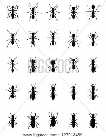 Black silhouettes of ants and termites, vector