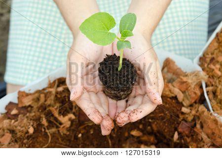 A girl grows melon sapling in small home garden
