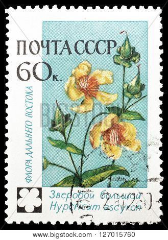 SOVIET UNION - CIRCA 1960 : Cancelled postage stamp printed by Soviet Union, that shows Hypericum.