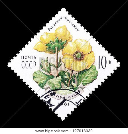 SOVIET UNION - CIRCA 1981 : Cancelled postage stamp printed by Soviet Union, that shows Parageum montanum.