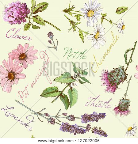 Vector seamless pattern with wild flowers and herbs. Background design for cosmetics, store, beauty salon, natural and organic products. Can be used as texture , wrapping paper and fabric print