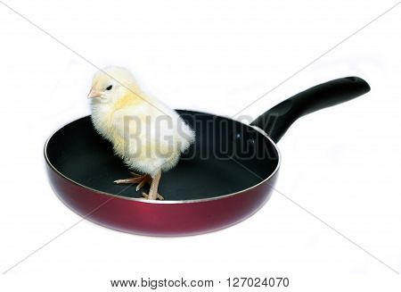 Nestlings little yellow chick on frying pan with non-stick coating isolated on white background