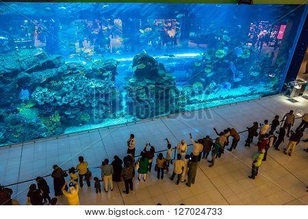 Aquarium In Dubai Mall