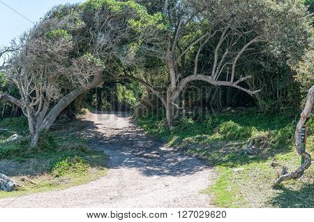 STORMS RIVER MOUTH SOUTH AFRICA - FEBRUARY 29 2016: The road to the forest cabins at the rest camp at Storms River Mouth