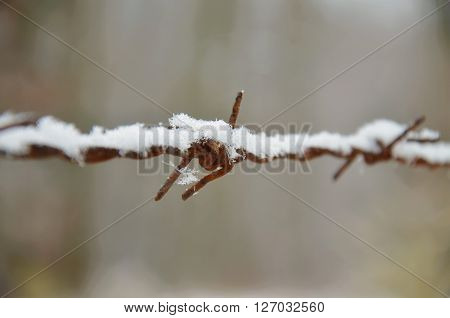 old barbed wire with snow in winter