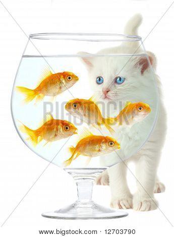 Gatinho e peixe