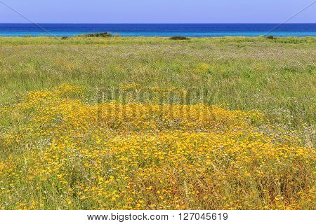 Summer seascape: The Regional Natural Park Dune Costiere.BRINDISI (Apulia)-ITALY-Marine dunes with wild flowers.The park, from Torre Canne to Torre San Leonado, covers the territories of Ostuni and Fasano  along eight kilometers of coastline.