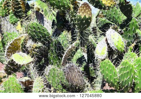 Opuntia cacti green pattern - natural background