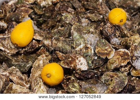 ice and three lemon on oysters background pattern
