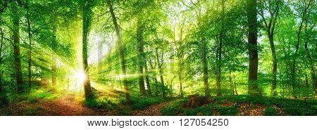 Beech forest panorama and the sun with bright rays of light beautifully shining through the trees