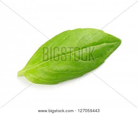 Fresh basil leaf isolated on white
