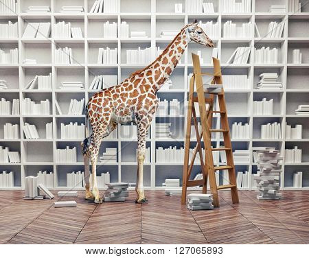 an giraffe baby  in the room with book shelves. Creative photo combination concept