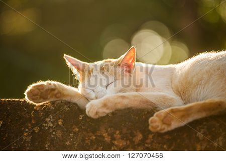 Stray cat lying sleeping outside. Shot in backlight at sunset with the beautiful bokeh. Shallow depth of field.