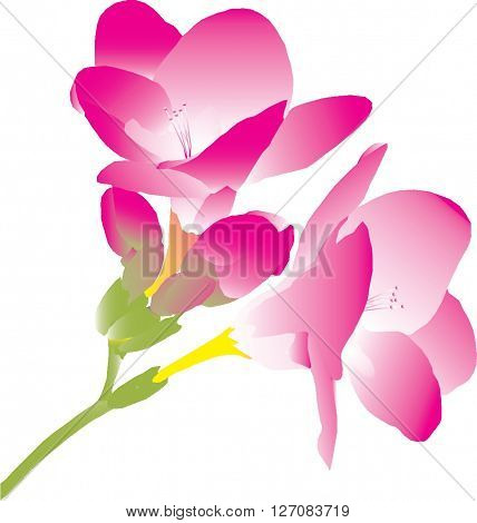 branch with pink flowers freesia pale pink