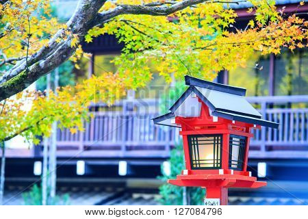 Autumn Colors In Japan, Beautiful Autumn Leaves