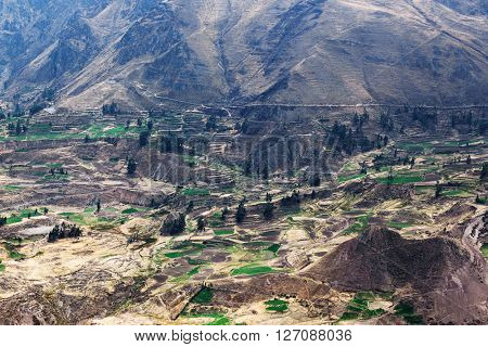 agricultural fields and the road in the Andes