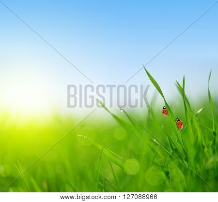 Fresh green grass with ladybugs closeup. Soft Focus. Nature Background