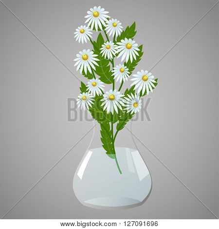Bouquet of daisies in a clear vase on gray background, vector illustration
