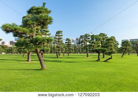 Pine trees park in front of skyscrapers
