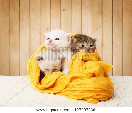 White and grey kittens. Cute kittens in a yellow cotton textile isolated at wooden background. Adorable pets. Small heartwarming kittens. Little cats. Animals isolated. High key