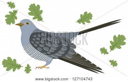 Vector Illustration of cuckoo. Cuckoo on white background. Vector illustration of cuckoo.