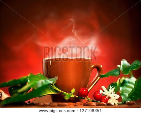 Coffee. Cup of steaming coffee with the real coffee ripe berries, flowers and leaves on a branch of