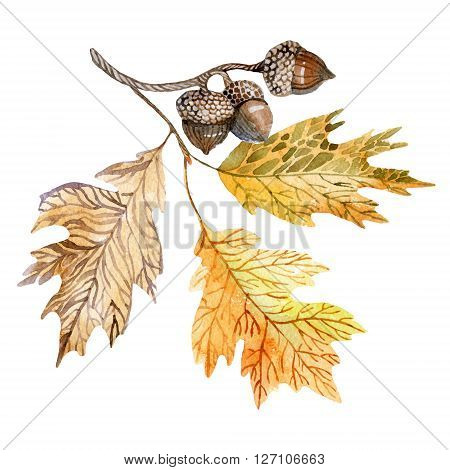 Watercolor illustration with acorns and oak leaves. Can be used for pattern wrapping fabric background etc.