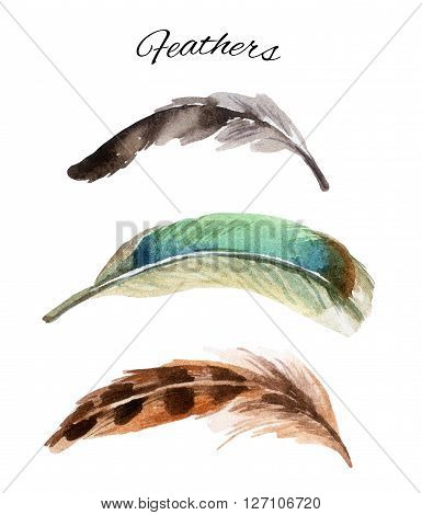 watercolor set of curved feather hand drawn illustration isolated on white background
