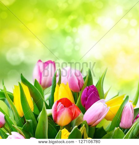 Spring background with a bouquet of fresh tulips