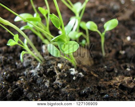 Small seed ball with green flower seedlings
