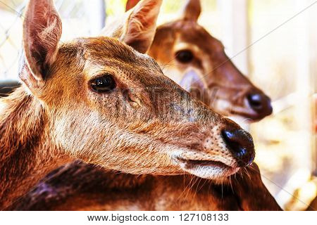 Deer inside a zoo with in Thailand.