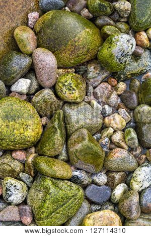Beach boulders covered in seaweed making a colorful background